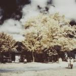 tobiu16_akita_15-s